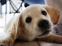 This photo is from Your Puppy Pictures