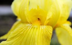 Desktop Wallpaper · Gallery · Nature Yellow petals