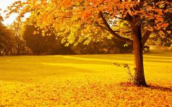 Yellow red autumn park