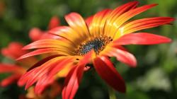 macro red yellow flower hd wallpapers