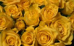 Wallpaper Yellow Wedding Bouquets with Stock: Yellow Roses Wallpaper Viewing Gallery 1920x1200px