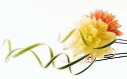 Yellow flower art hd wallpaper