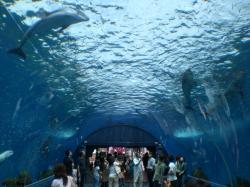 Yokohama Hakkeijima Sea Paradise, ...