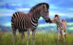 A bacteria found in zebra droppings consumes cellulose and converts it into butanol, a fuel that can be used in current automobiles using internal ...
