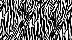 Zebra Print Background 18497 1240x800 px