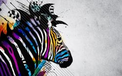 Free Zebra Wallpaper