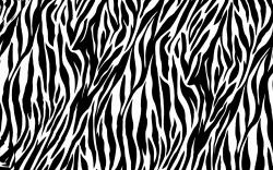 Zebra Wallpaper 12