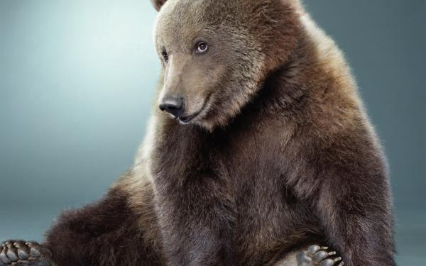 Cute Bear Pictures