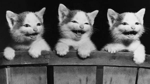 happy kittens