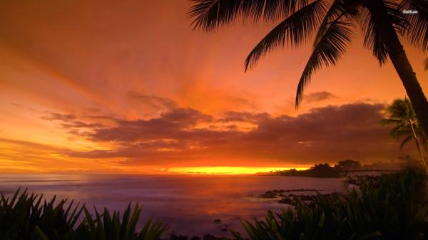 hawaii beach night