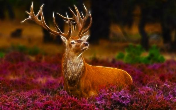 Wild Deer Wallpaper